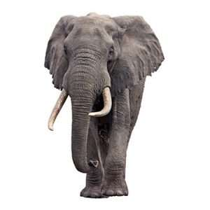 The Blind Men and the Elephant: Why Major Spares Should be Managed Centrally